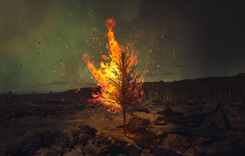Photo wallpaper forest, birds, tree, fire, fire, forest, wood, birds, Ricardo Da Cunha