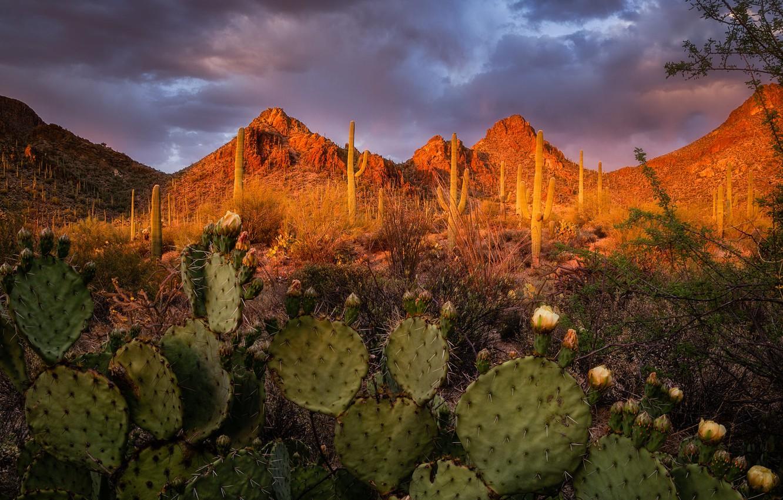 Photo wallpaper landscape, sunset, mountains, nature, AZ, cacti, USA, Tucson Mountain Park