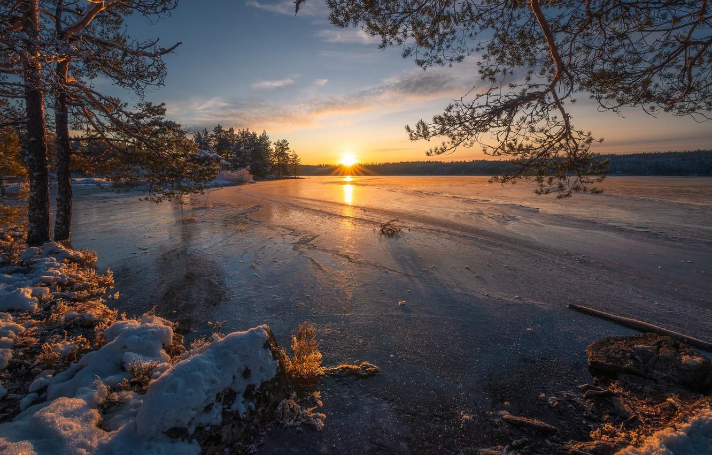 Photo wallpaper winter, trees, sunset, lake, ice, Norway, pine, Norway, RINGERIKE, Ringerike, frozen