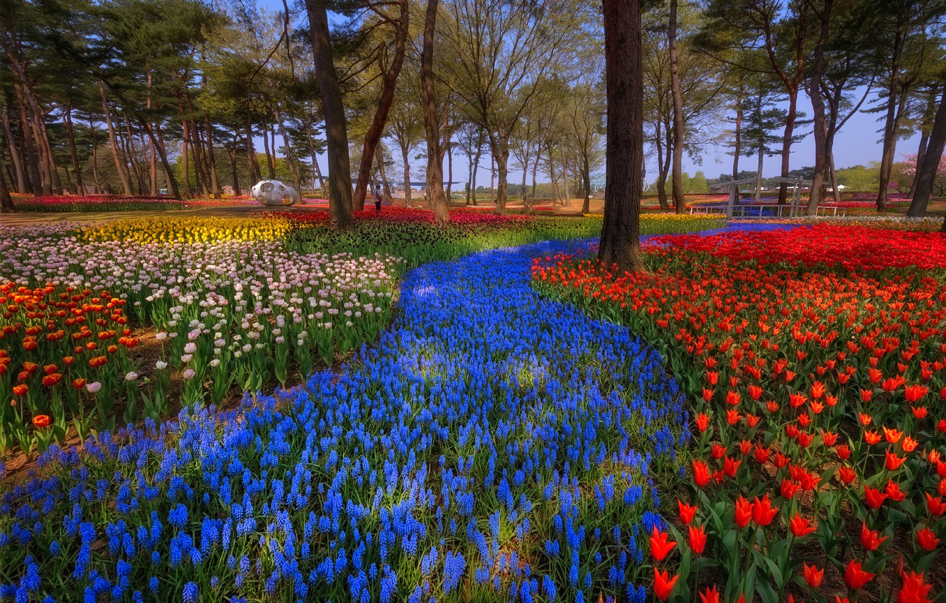 Photo wallpaper light, trees, flowers, nature, Park, bright, beauty, track, spring, Japan, garden, tulips, red, colorful, blue, ...