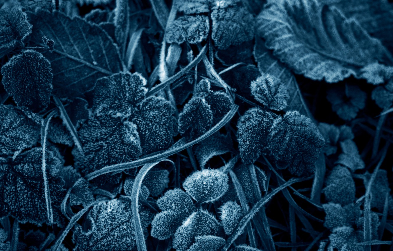 Photo wallpaper frost, leaves, frost
