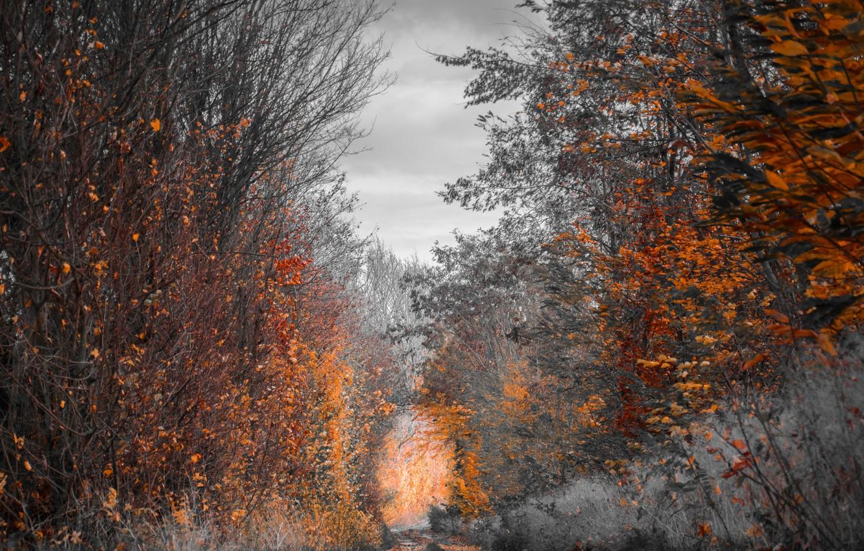 Photo wallpaper FOREST, TRAIL, AUTUMN