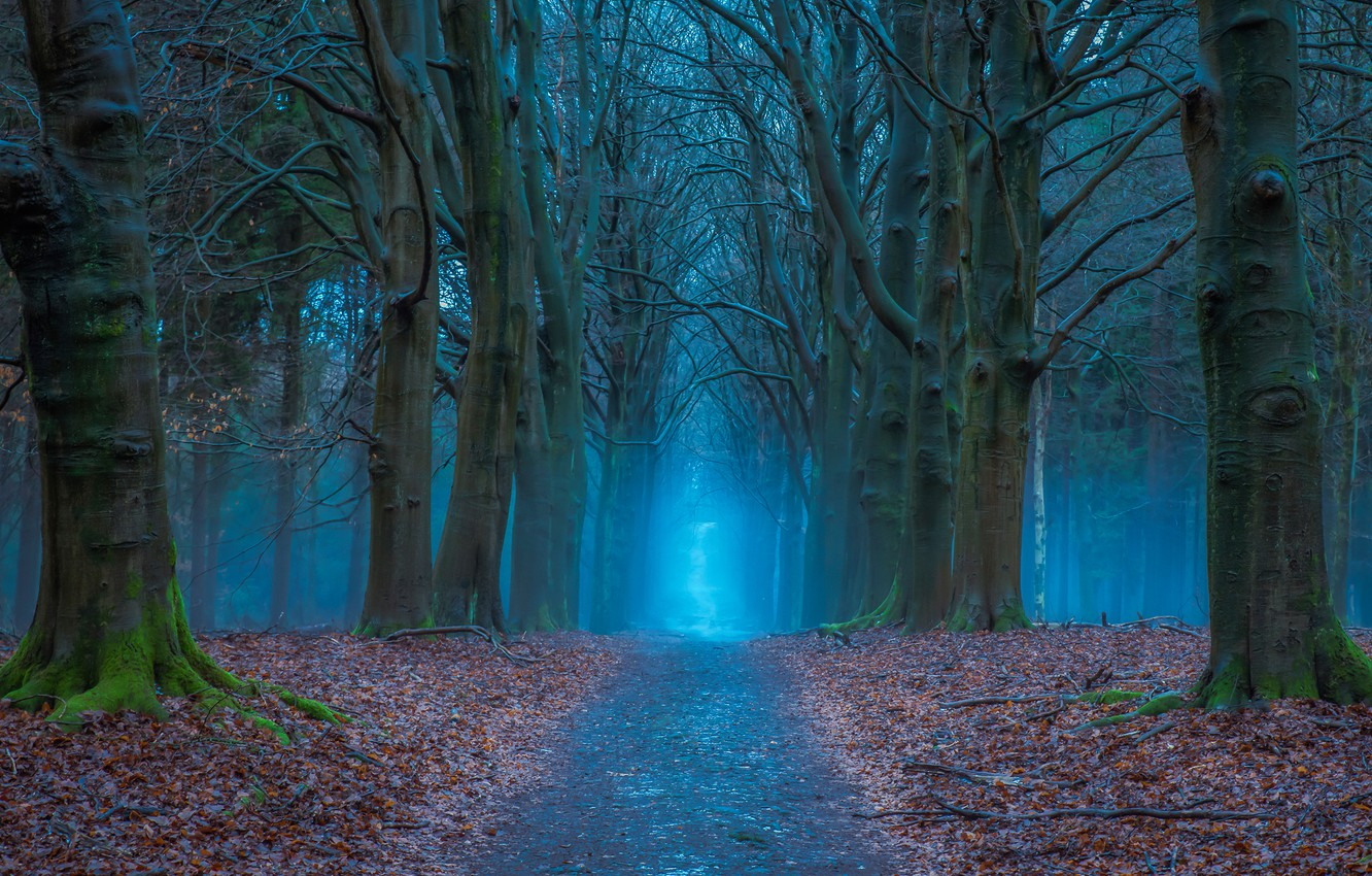 Photo wallpaper road, autumn, forest, trees, Netherlands