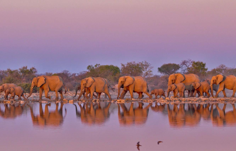 Wallpaper Elephants South Africa The Herd Kruger National