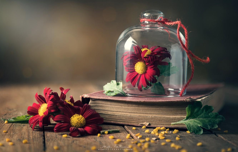 Photo wallpaper style, chamomile, book, стеклянный клош