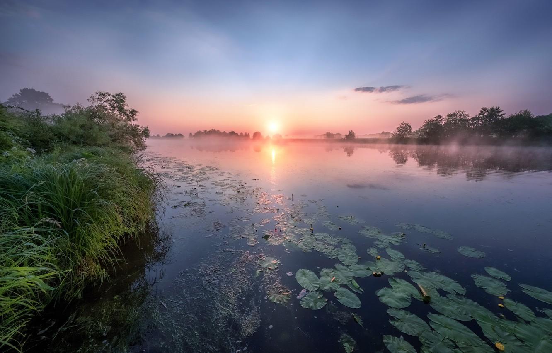 Photo wallpaper summer, grass, trees, landscape, nature, river, dawn, morning, Bank, water lilies, Dubna, Andrei