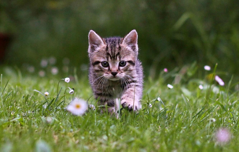 Photo wallpaper grass, kitten, cat