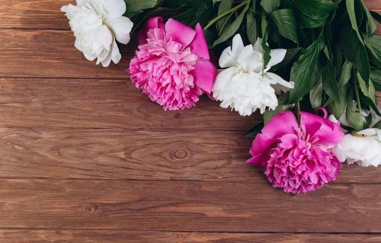 Photo wallpaper flowers, pink, white, white, wood, pink, flowers, peonies, peonies
