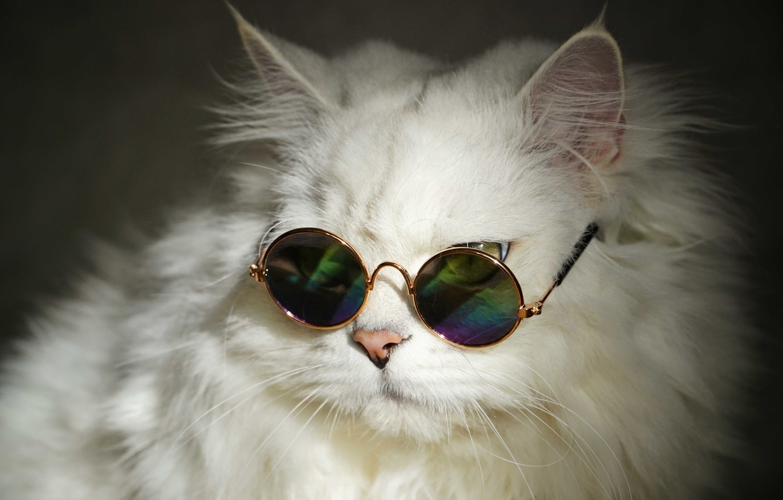 Photo wallpaper white, fluffy, Cat, glasses, British