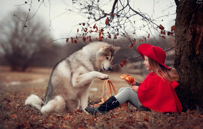 Photo wallpaper autumn, nature, tree, animal, basket, dog, girl, hat, child, Cape, dog, roll, Anna Ipatiev