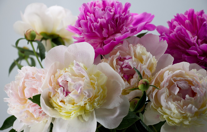 Photo wallpaper flowers, bouquet, flowers, peony