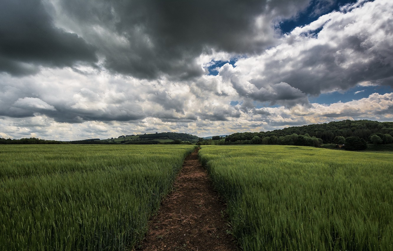 Photo wallpaper field, summer, the sky, clouds