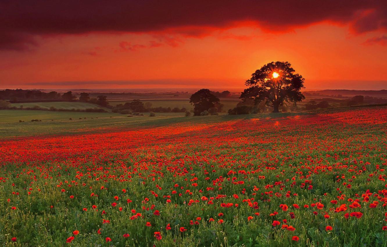Photo wallpaper field, sunset, fog, Maki