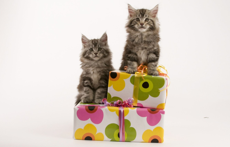 Photo wallpaper cats, pair, kittens, gifts, box