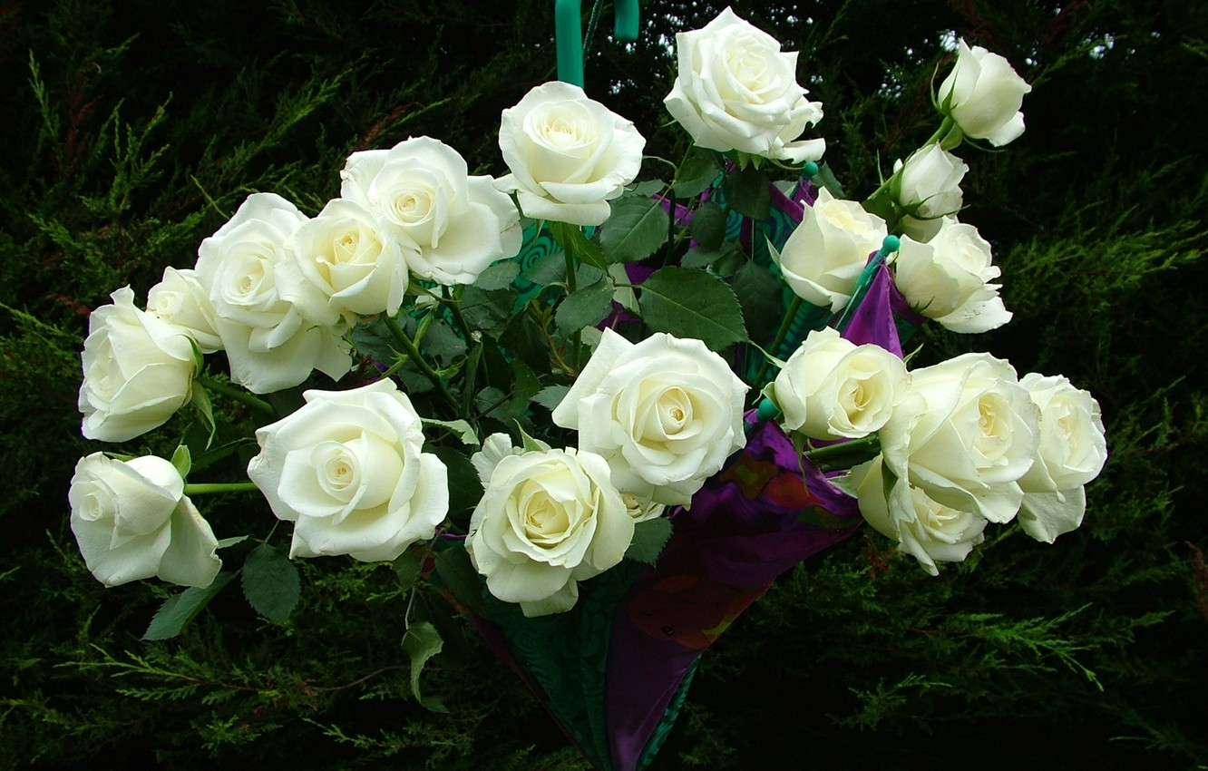 Wallpaper Umbrella Roses Bouquet White Roses Images For