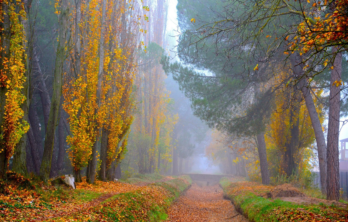 Photo wallpaper road, autumn, forest, leaves, trees, branches, nature, fog, Park, branch, foliage, morning, yellow, track, alley, …