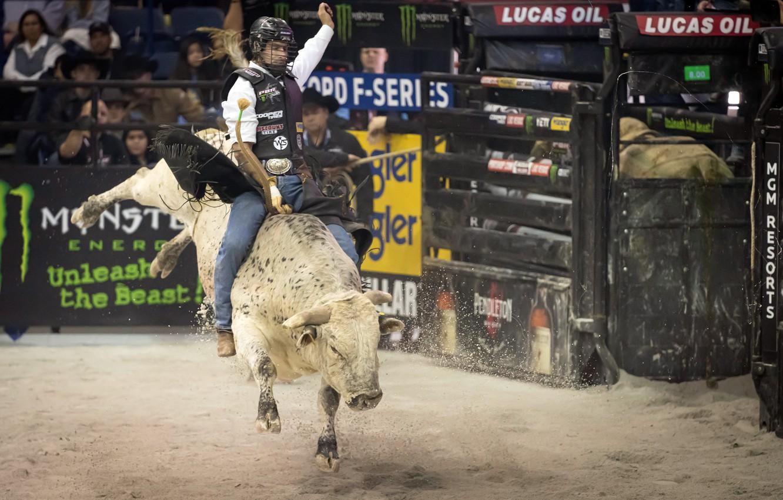 Professional, Bull Riders