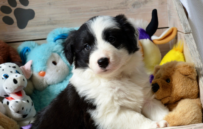 Photo wallpaper look, black and white, toys, dog, baby, bear, puppy, Bunny, face, Teddy, ladybug, Milota, the …