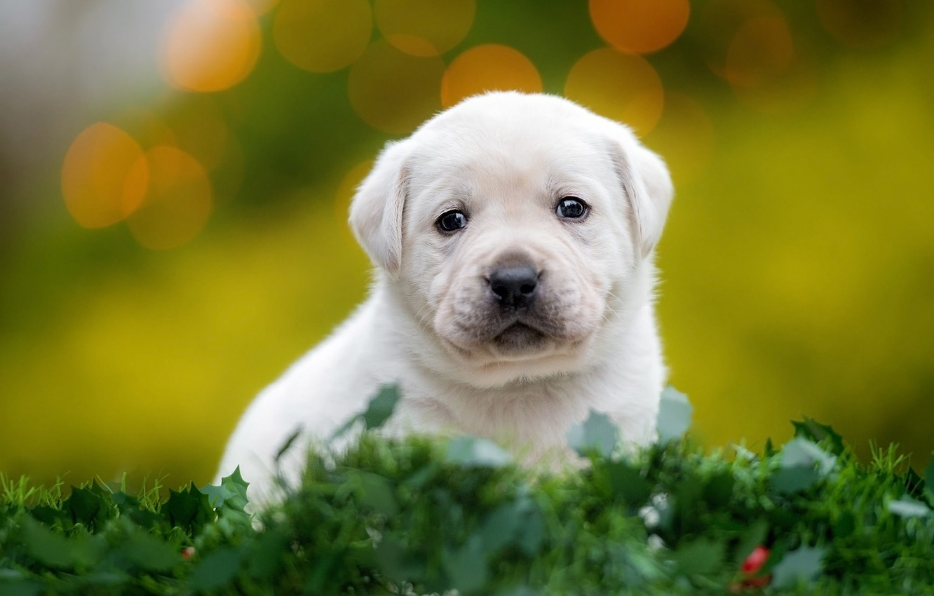 Photo wallpaper greens, white, grass, look, leaves, dog, small, baby, muzzle, puppy, sitting, green background, bokeh