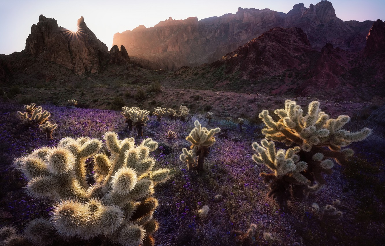 Photo wallpaper mountains, morning, cacti