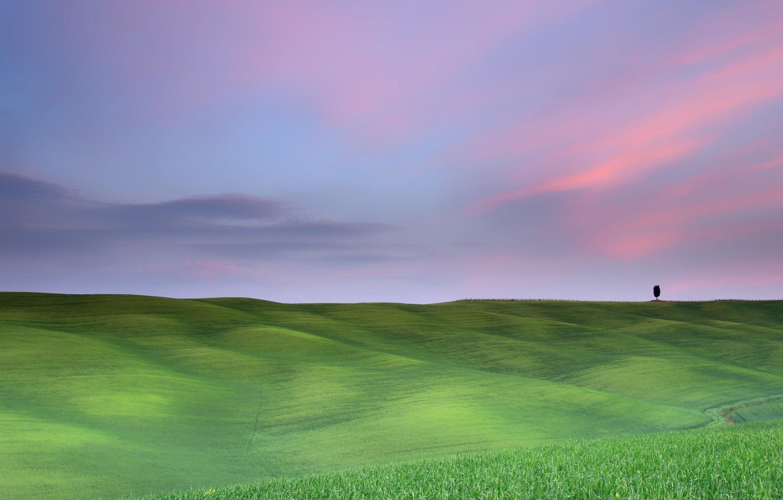 Photo wallpaper field, tree, the evening, morning, haze