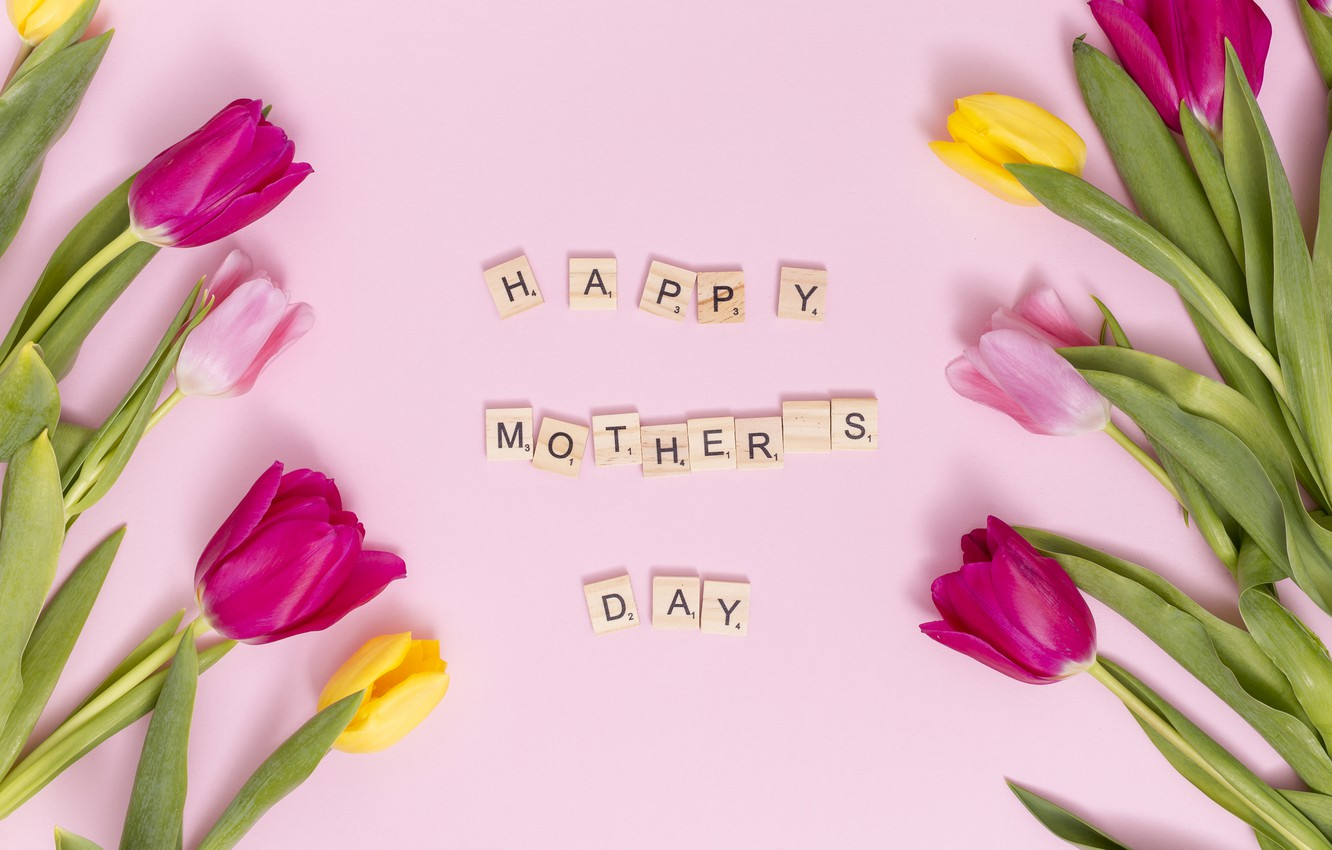 Photo wallpaper flowers, colorful, tulips, pink, pink, flowers, tulips, spring, purple, mother's day
