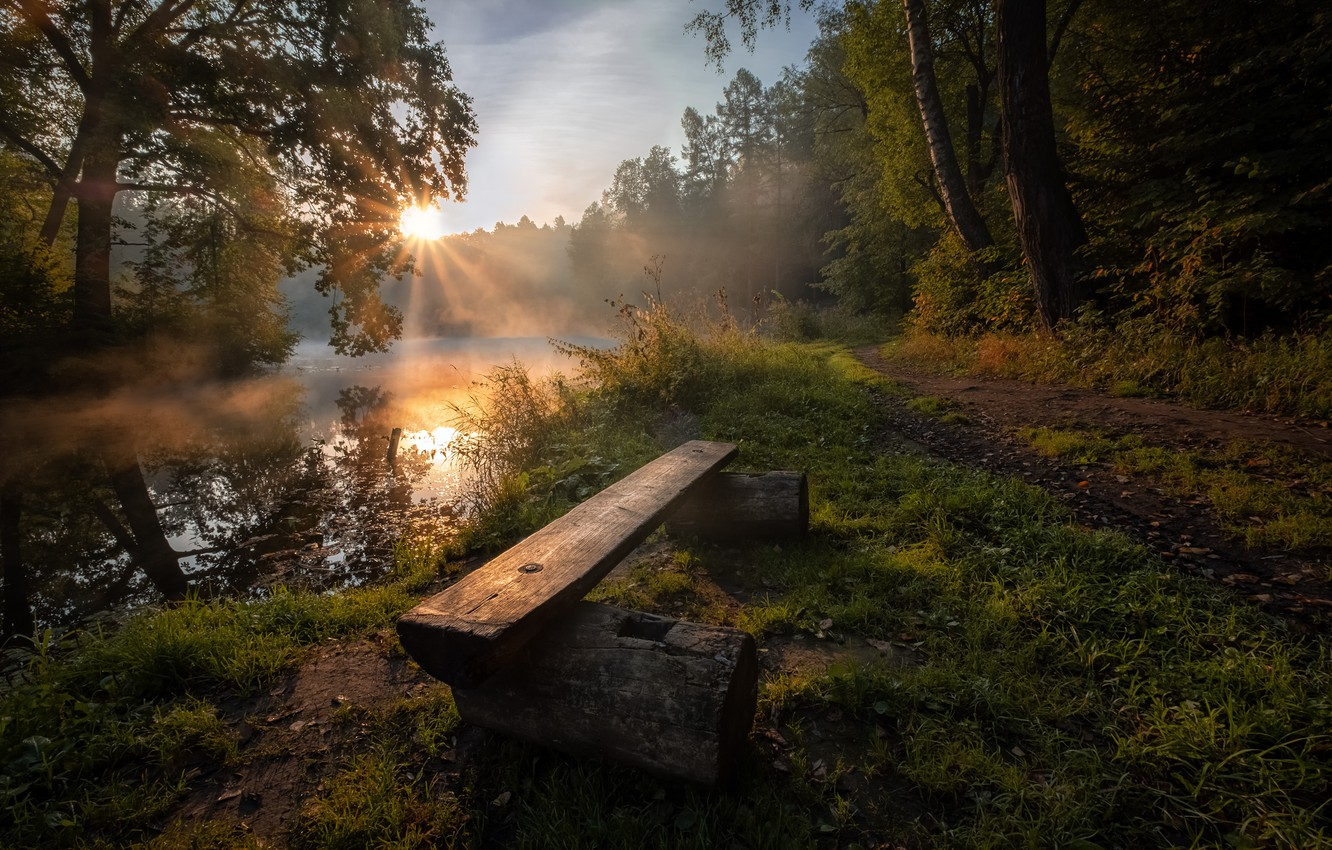 Photo wallpaper forest, summer, the sun, rays, nature, river, dawn, morning, Russia, Andrei