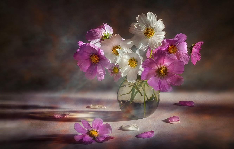Photo wallpaper flowers, bouquet, pink, white, vase, kosmeya, cosmos