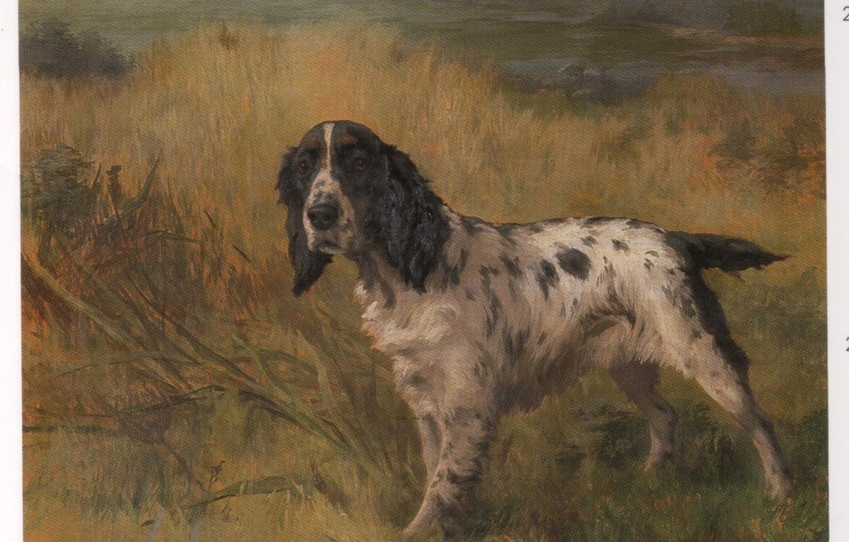 Photo wallpaper grass, dog, ears, EARL