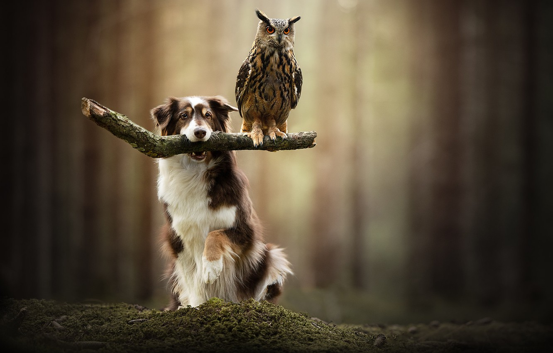 Photo wallpaper owl, bird, dog, bokeh, owl