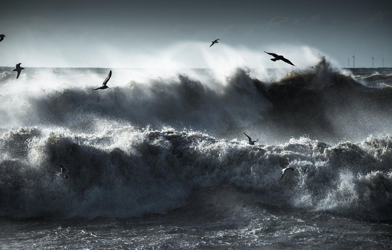 Wallpaper Sea Wave Flight Squirt Birds Storm Seagulls