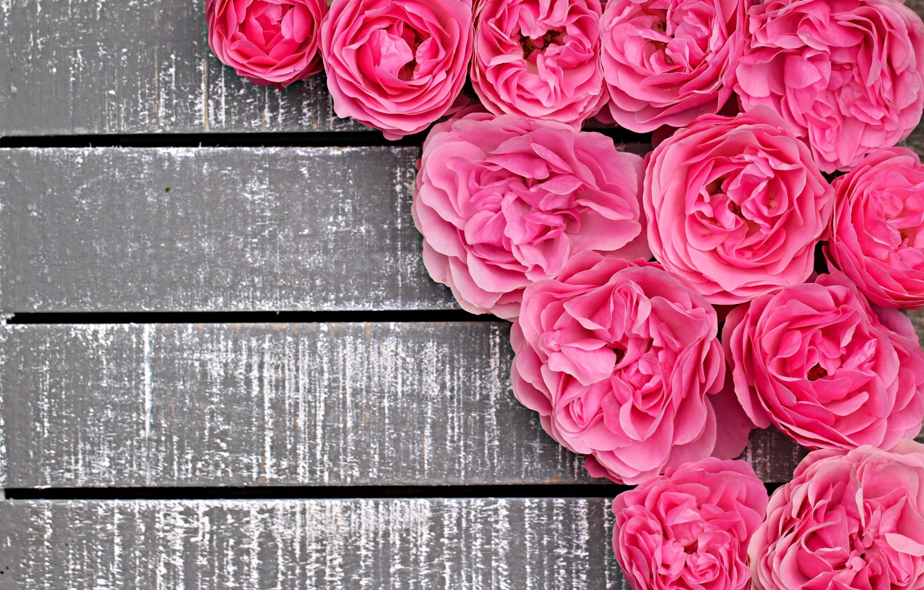 Photo wallpaper roses, pink, buds