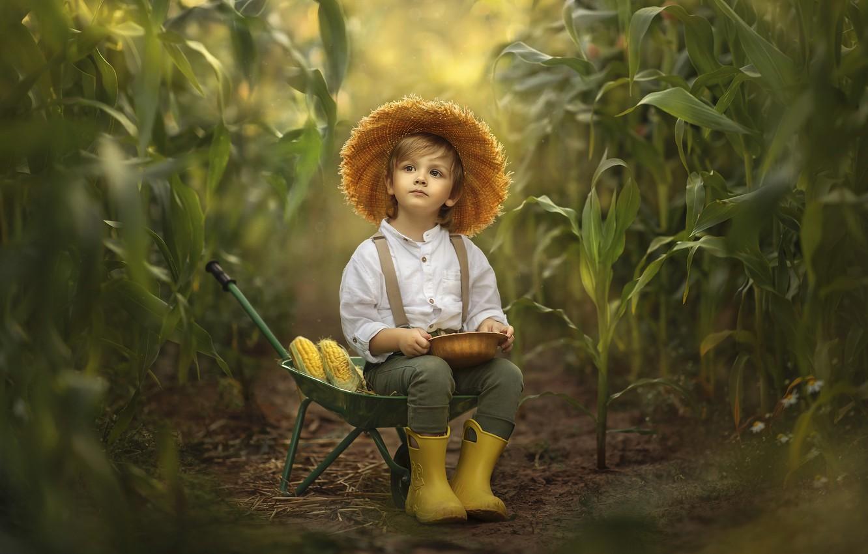 Photo wallpaper nature, thickets, boy, corn, car, child, Jansone Dace