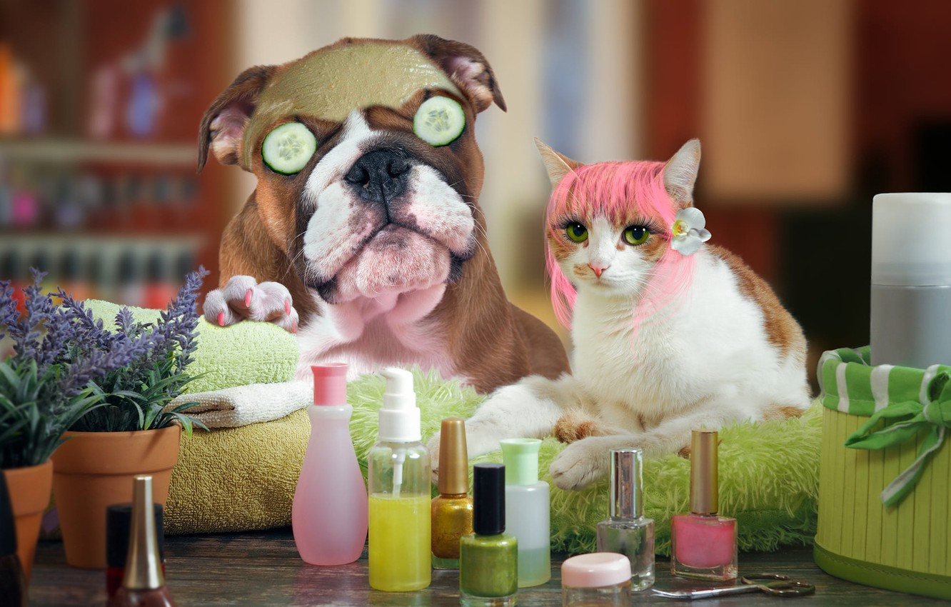 Photo wallpaper cat, eyes, look, face, pose, eyelashes, table, background, beauty, dog, paws, makeup, mask, hairstyle, pair, …