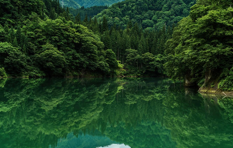 Photo wallpaper green, trees, lake, grennery