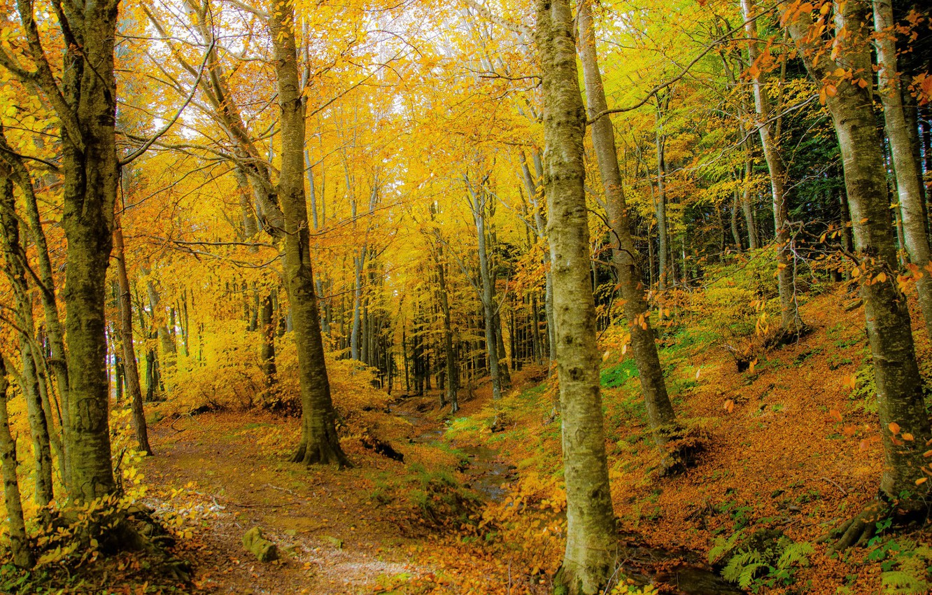 Photo wallpaper autumn, forest, trees