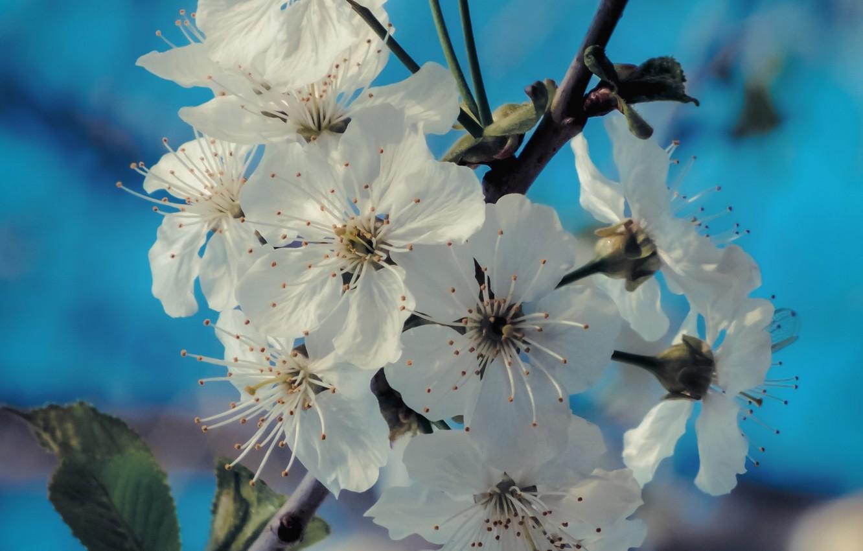 Photo wallpaper flowers, branch, spring, flowering, flowers, spring, branch, bloom