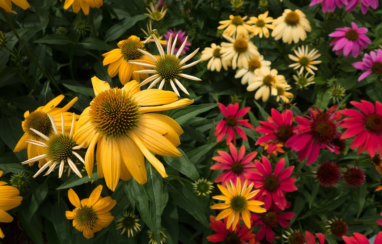 Photo wallpaper flowers, garden, flowers