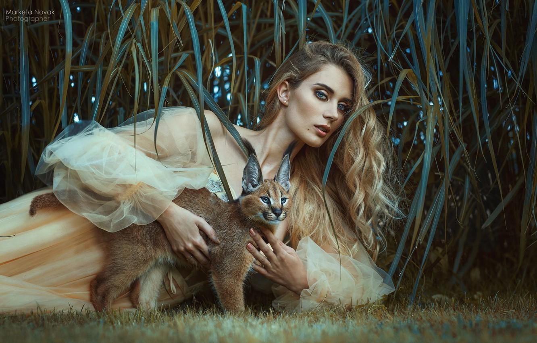 Photo wallpaper grass, look, girl, pose, hair, dress, wild cat, Caracal, Marketa Novak, Andrea Záleská