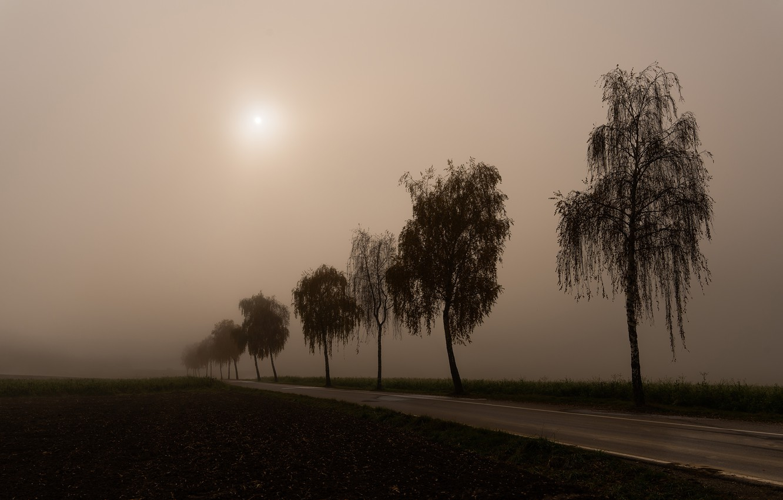 Photo wallpaper road, fog, morning, birch, silhouettes, birch