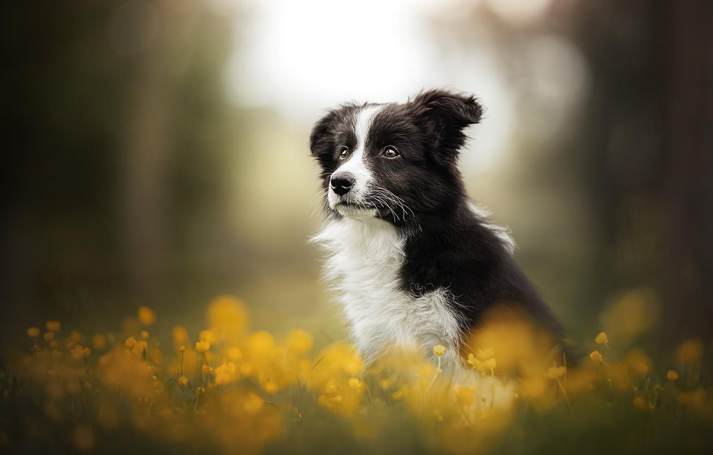 Photo wallpaper flowers, dog, puppy, bokeh