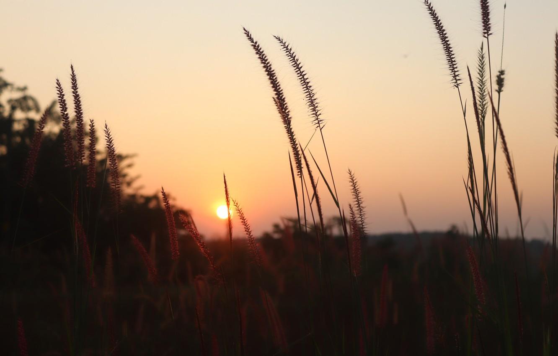 Photo wallpaper Nature, Grass, Sunset, Field