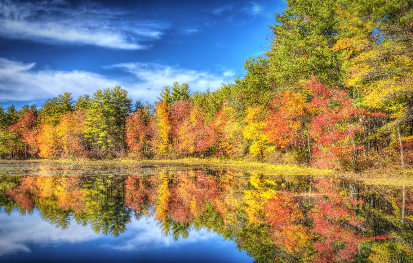 autumn, forest, trees, lake, reflection