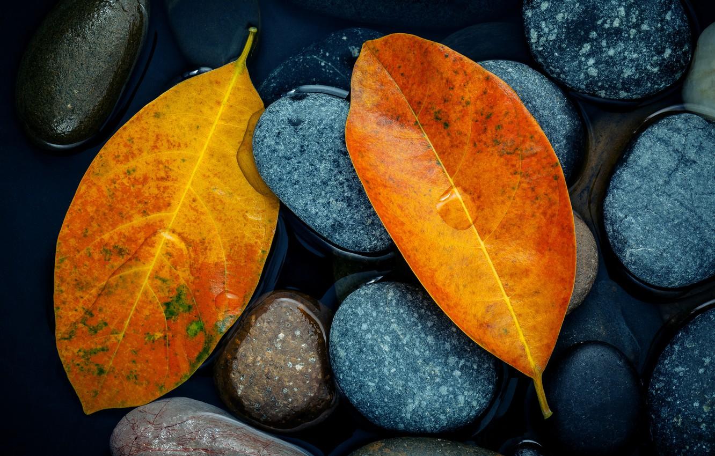 Photo wallpaper autumn, leaves, stones, yellow, yellow, stone, autumn, leaves, autumn