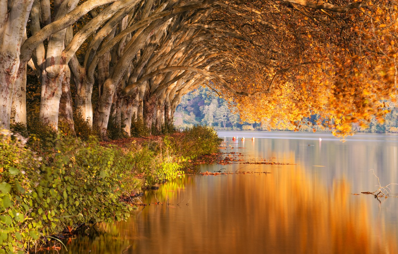 Photo wallpaper forest, trees, autumn, lake, landscapes, bushes, shore, reflection, plants, branches, blur effect, 4k uhd background