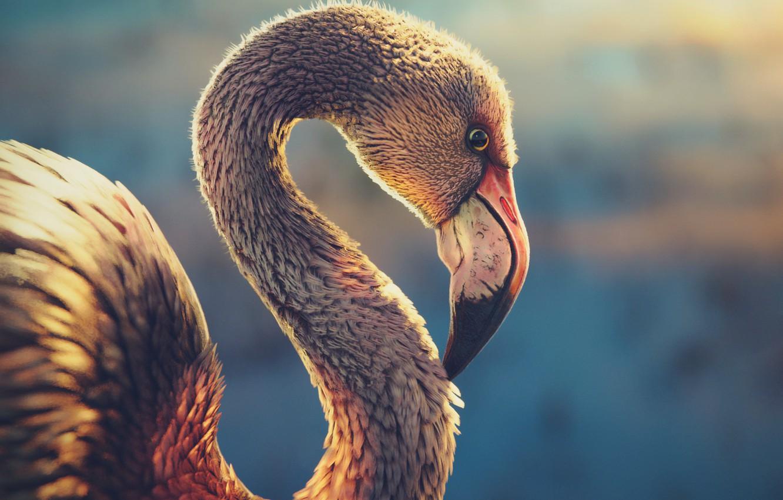 Photo wallpaper sunset, dawn, bird, Flamingo
