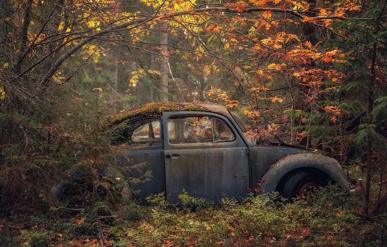 Photo wallpaper machine, autumn, forest, scrap