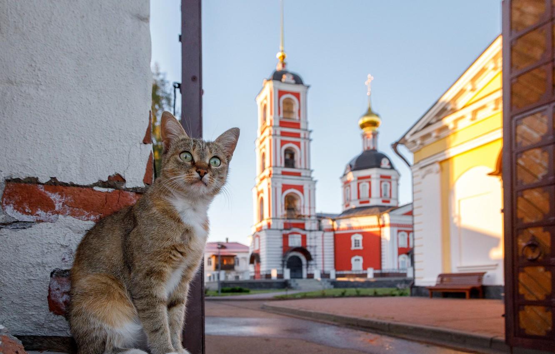 Photo wallpaper cat, cat, Church, cat, Ilya Garbuzov