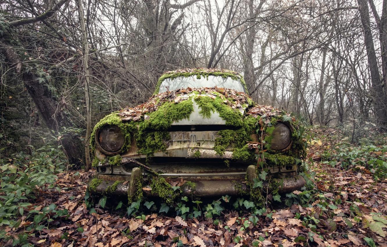 Photo wallpaper machine, moss, scrap