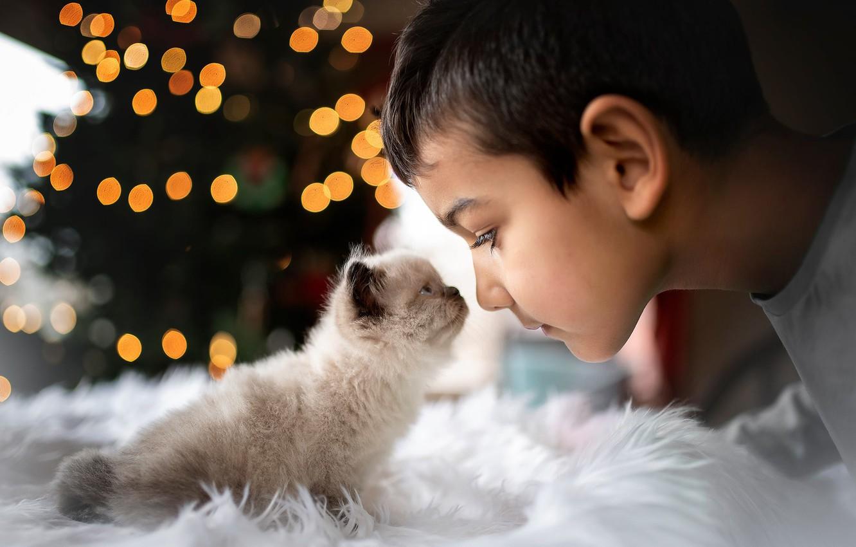 Photo wallpaper face, glare, boy, baby, fur, kitty, friends, peepers